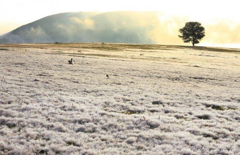 Vẻ đẹp của đồi cỏ tuyết Đà Lạt